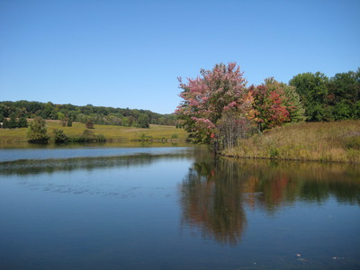 Banner_option_14-lake___red_tree